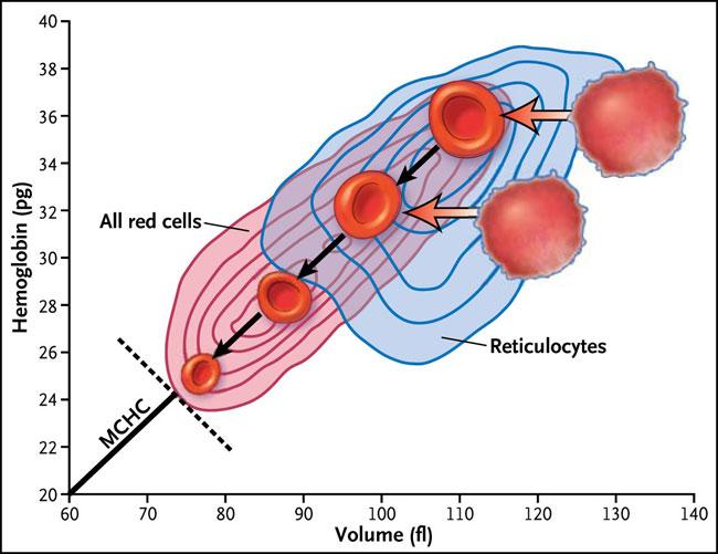 Biología de sistemas y glóbulos rojos